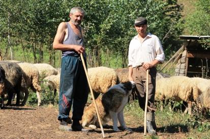 Schafhirten mit Hund