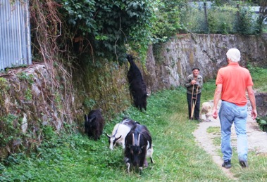 Ziegen hueten Ukraine